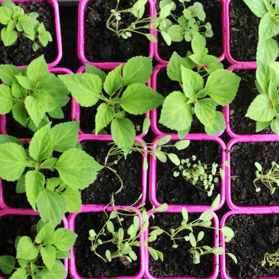 Rośliny miododajne