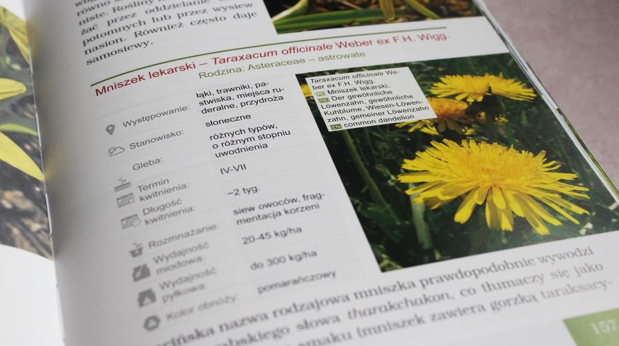 Fragment książki Rośliny pożytkowe