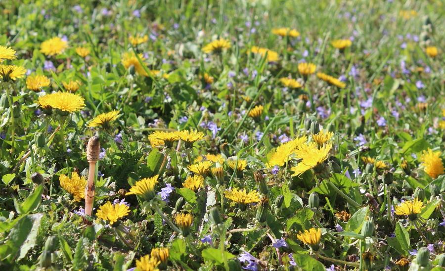 Żółte kwiaty na łące