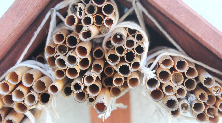 Trzcina na domek dla pszczół