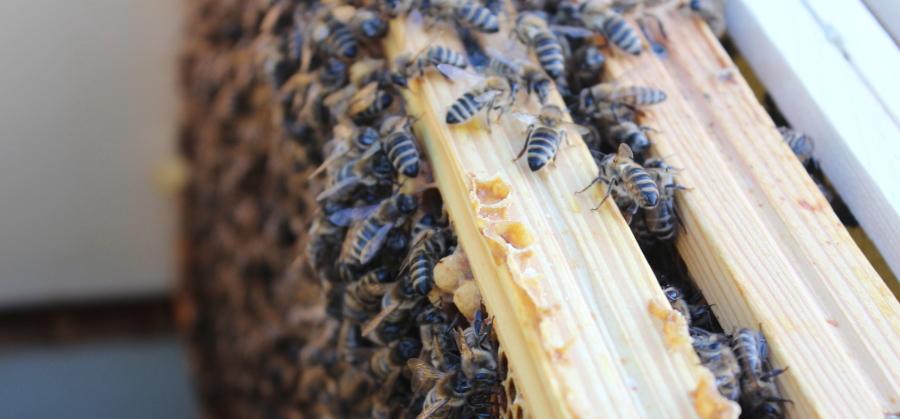 Ramki obsiadane przez pszczoły