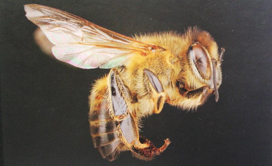 Okładka ksiązki 365 faktów o pszczołach