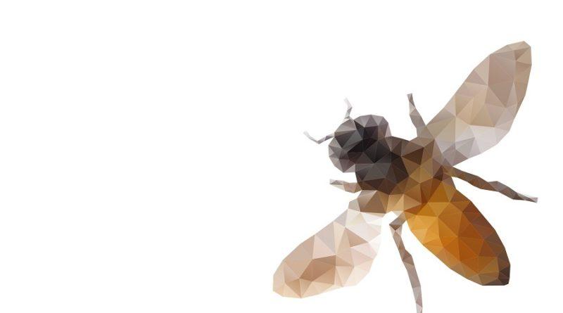 Pszczoła rasy Buckfast
