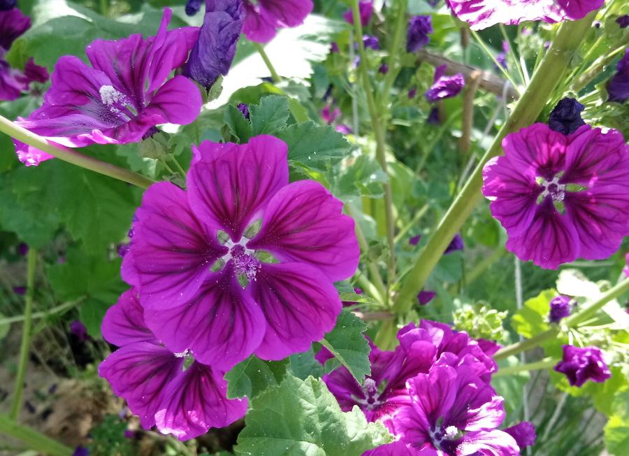 Kwiaty pyłkodajne