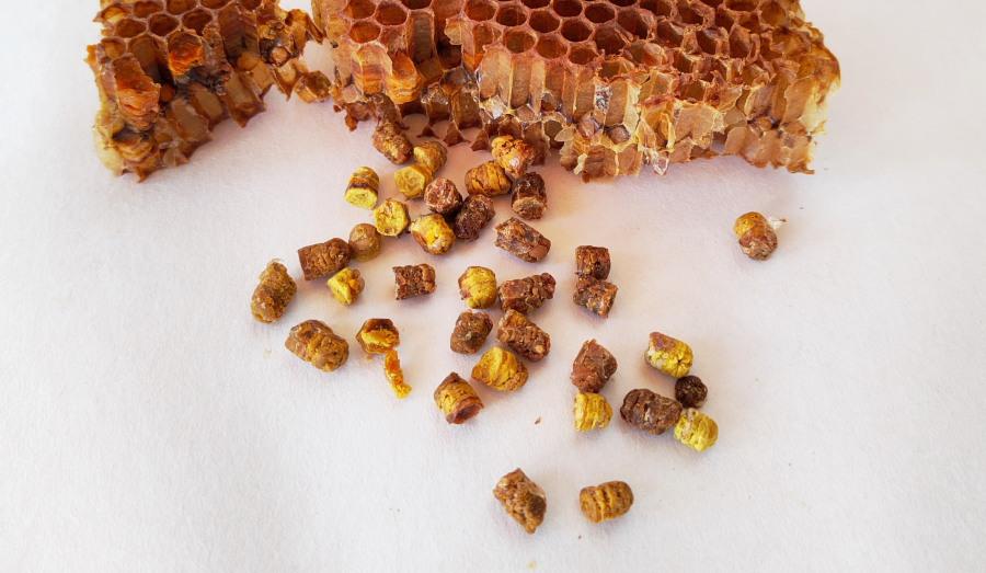 Właściwości pierzgi pszczelej